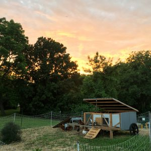 June Gardening To-Do List for Kansas City