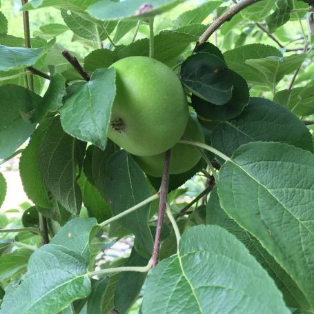 apple orchard care in kansas city