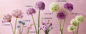 What to plant in the winter